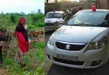 कभी लालबत्ती वाली गाडी में घूमा करती थी यह महिला, आज पेट भरने के लिए चराती है बकरियां